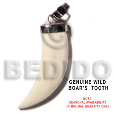 Wild boars tooth Horn Pendants