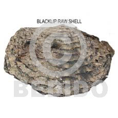 Ra unpolished blacklip shells Raw Shells