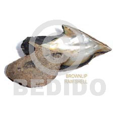 Ra unpolished brownlip shells asstd Raw Shells