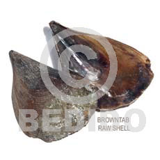 Ra unpolished browntab shells Raw Shells