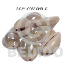 Loose sigay shells no Raw Shells