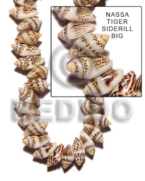 Nassa tiger sidedrill Shell Beads