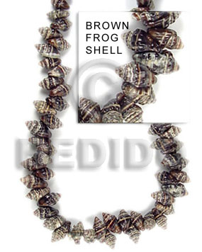 Frog shell brown medium Shell Beads