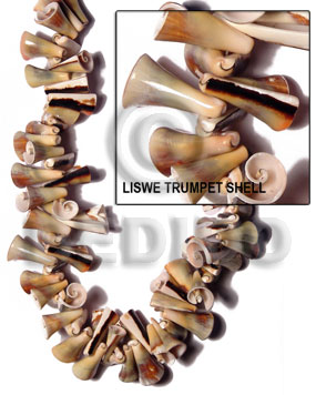 Liswe Trumpet Shell