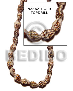 Nassa tiger topdrill Whole Shell Beads