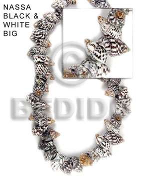Nassa black and white Whole Shell Beads